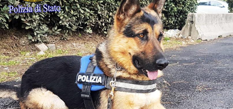 Roma, Ares da trovatello a cane in servizio presso la Polizia di Stato